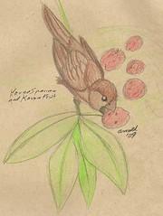 9.21.09 - House Sparrow at Kousa Dogwood