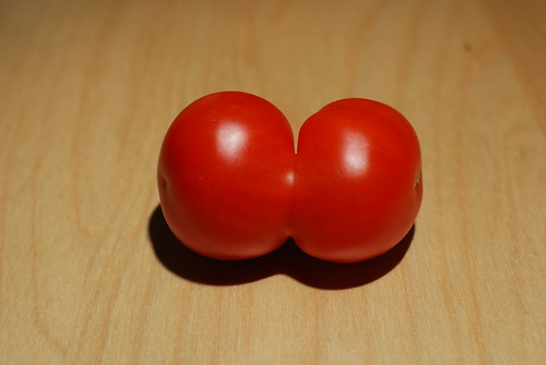 Conjoined twin tomato