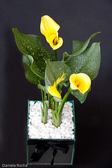 (daniela_m_rocha) Tags: arranjos florais