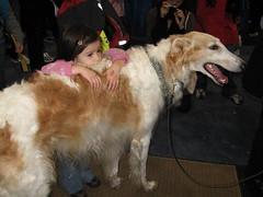 new york dogs center sighthound meet akc borzoi javits breeds