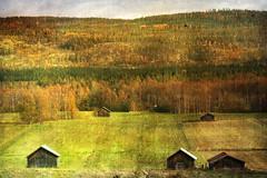 Northern countryside (texturedJohn) Tags: autumn fall texture rural sweden schweden north explore textures sverige northern suecia textured norrland sude svezia explored
