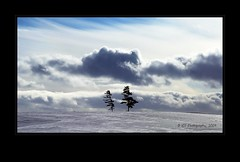 Together (ICT_photo) Tags: winter sky tree clouds hill guelph ianthomas ictphoto ianthomasphotography ianthomasguelphontario
