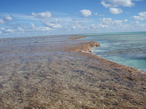 Lagoon edge of Minerva Reef