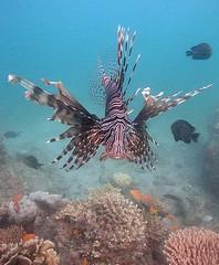 Lion Fish, Fim do Mundo