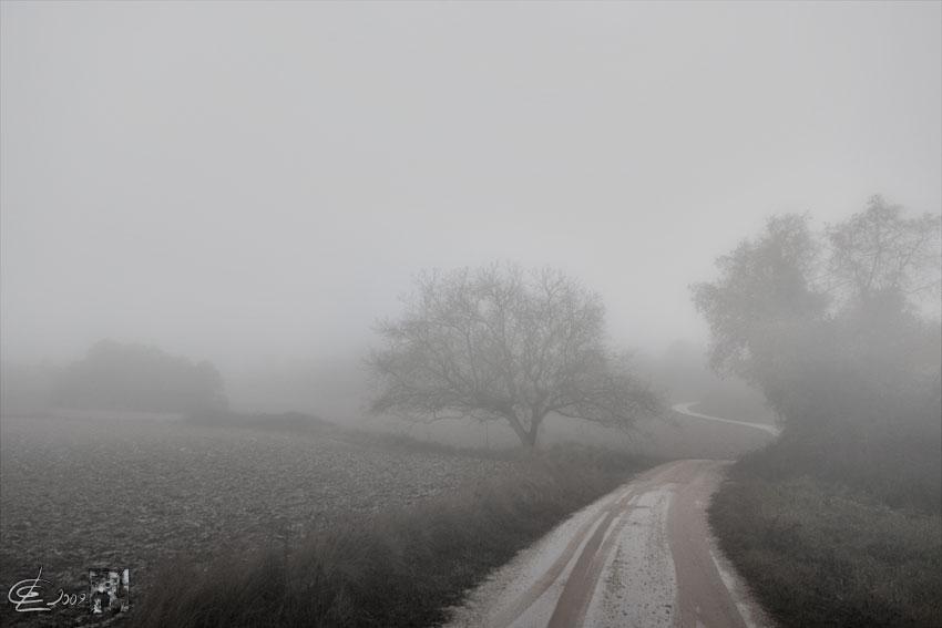 _DSC7023nogalen-la-niebla