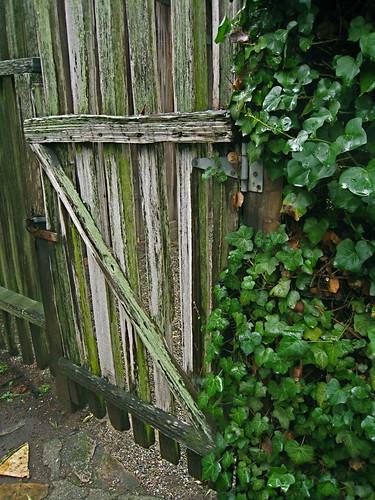Carmel gate