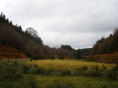 Djouce Woods, Co. Wicklow