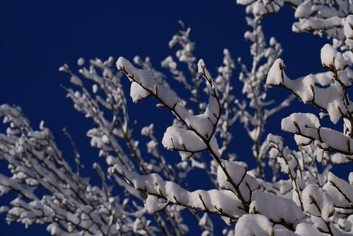 68/365 - Snow Trees