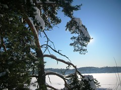 Snowy Winter Day in Norway #11