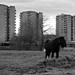 Urban Horse