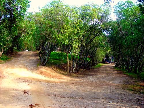 caminhos de portugal/ montemor-o-novo