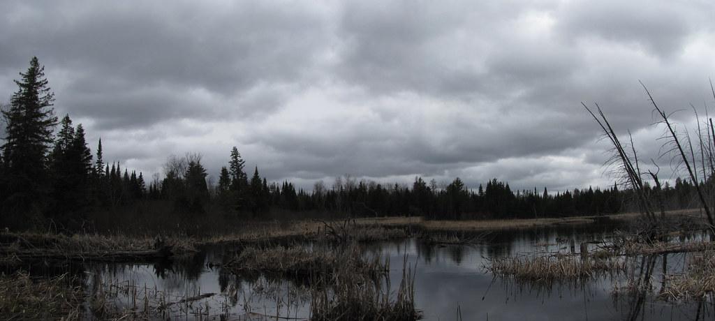 Lou's Beaver Pond