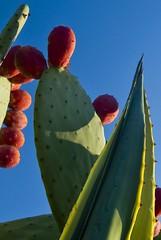 Special Cactus (moedonno) Tags: california cactus bill rizzo