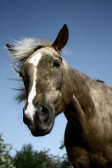 Farming, mane ( Fufue ) Tags: blue portrait sky horse nature canon hair cheval switzerland eyes suisse geneva yeux bleu animaux genve campagne mane poils crinire 450d