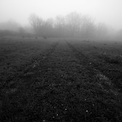 .Fog (Vincepal) Tags: fog lost areusure dontchangethewaywithoutconfidences