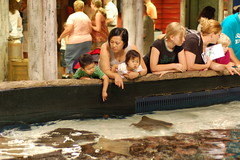 Rays touch tank