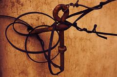 Strangled relationships ([-A-A-]) Tags: strangled