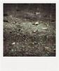 (Maryaneee) Tags: old film polaroid savepolaroid