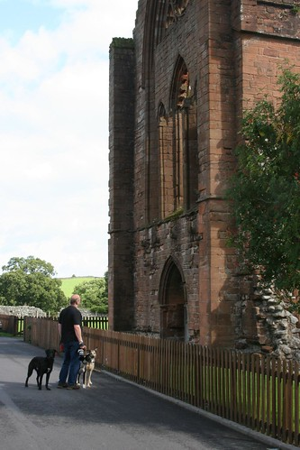 Lurchers do Sweetheart Abbey
