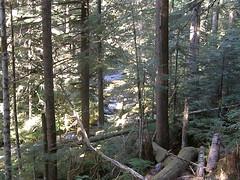 Rapids below trail.