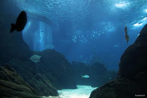 Le Oceanario livre en permanence de superbes images