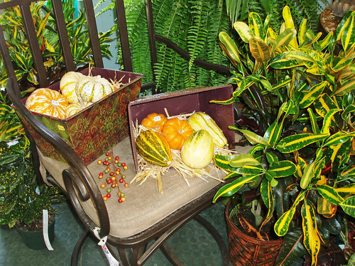 small pumpkins, gourds, squash, indoor plants