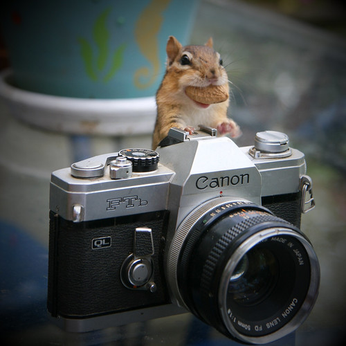 Need a cheap photographer?  This one works for peanuts