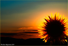20090713_9105 (Lino Sgaravizzi ) Tags: tramonto natura sole paesaggi girasole controluce platinumphoto theunforgettablepictures artofimages bestcapturesaoi coth5