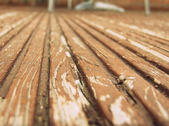10/365 - I apologise for this. (JemmaJusticePhotography.) Tags: wood art garden outdoors photography justice focus paint dof bokeh crack jemma imprefection jemmysaur jemmaammej