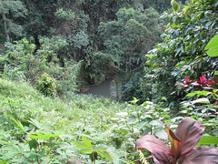 Between Goa Gajah and Yeh Pulu