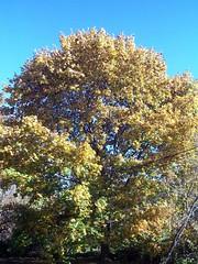 Foliage_102509b