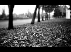 It's like we've been here before (Dustin Diaz) Tags: autumn blackandwhite bw fall season leaf nikon bokeh frame nikkor hbw 50mmf14g d700