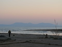 passejant el gos (carbassona / Nria) Tags: dog mar arena perro gos sorra naturepeople massisdelmontgr