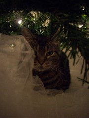 Bob the Cat Prowler (courtneysmilestoo) Tags: christmas tree animal cat
