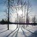 10:365阳光,雪和阴影