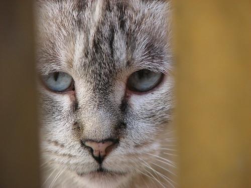 Miaus