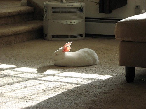 bun in the sun