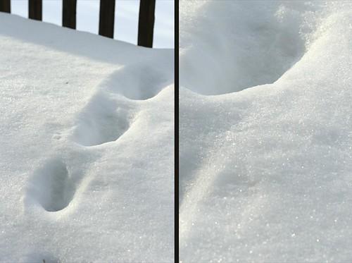 snow dip