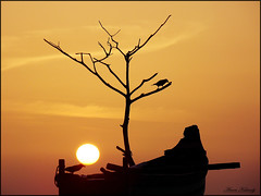 Looking for dinner (aroon_kalandy) Tags: light sunset orange india seascape beach nature beauty birds landscape creativity evening boat artistic awesome greatshot impressions naturelovers calicut sihloutte supershot beautifulshot anawesomeshot malayalikkoottam sonyh50 aroonkalandy lovely~lovelyphoto