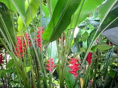 Day 3-44 (djfrantic) Tags: summer vacation island hawaii kauai fourthofjuly gardenisland ntbg allertongarden mcbrydegarden nationaltropicalbotancalgarden