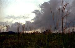Weeding sky (ıusnɾ@w|©kedf|lm) Tags: film olympus images om2n jusninasirun jusni