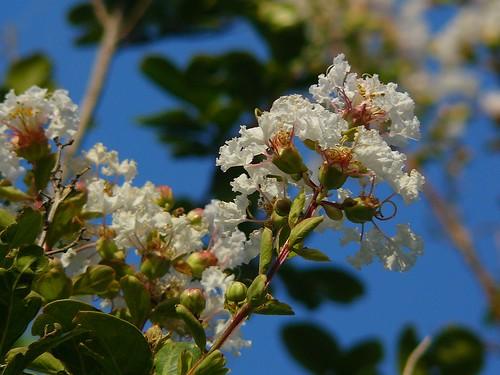 flowers cm white2