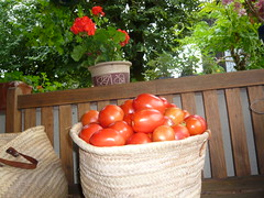 """tomatoes"""" width="""