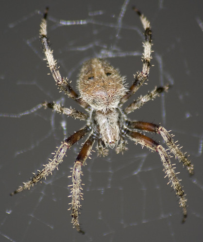 unknown spider_3