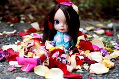 1/4 Rosey Among the Rose Petals 364/365