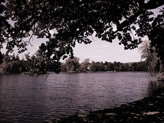 looking onto the lake... (butterflies* & hurricanes **) Tags: trees water peace calming serenity naturistic
