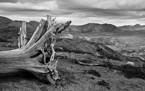 Tree with St Helens moonscape