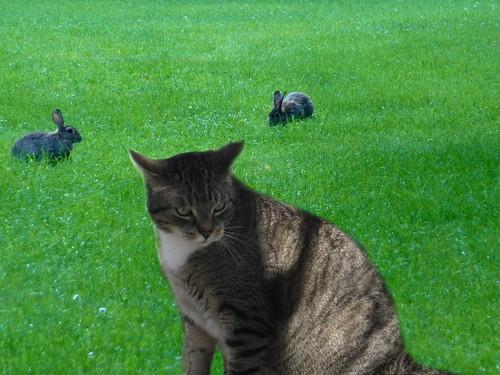 Spocky und die Hasen