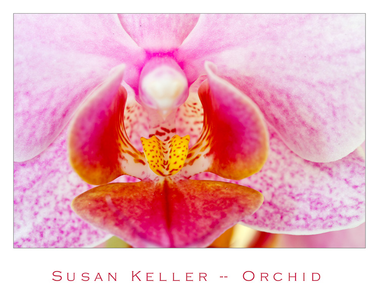 orchid with fine art mat-2