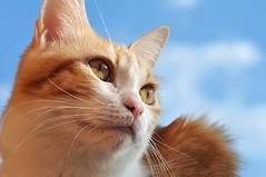 No November rain.... (pippy & timmy) Tags: sun clouds cat blueskies 1stofnovember justsawtheweatherforecast thunderstormstomorrow